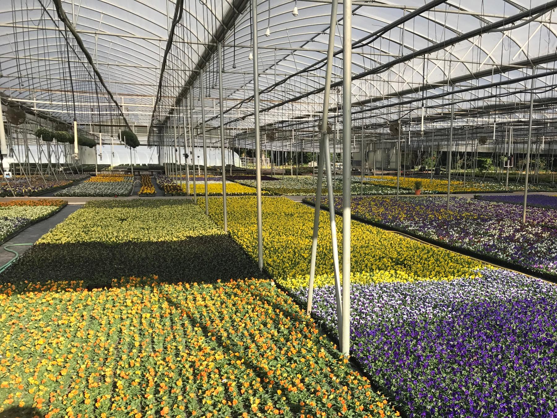 King S Greenhouse Growing Range And Whole Operation